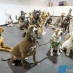 Dog Rubber Floor
